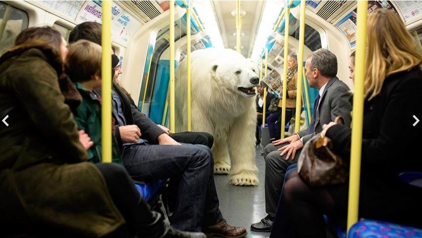 oso polar, Campañas publicitarias, Creatividad - Polar bear