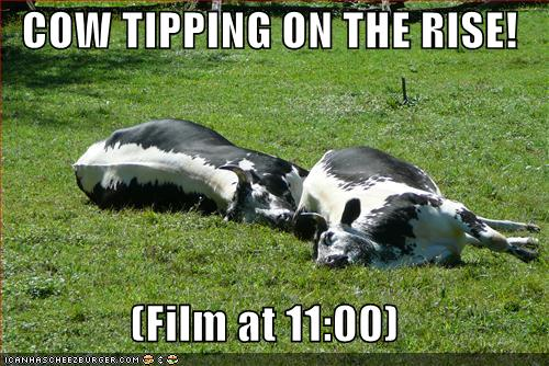 cow+tipping1.jpg
