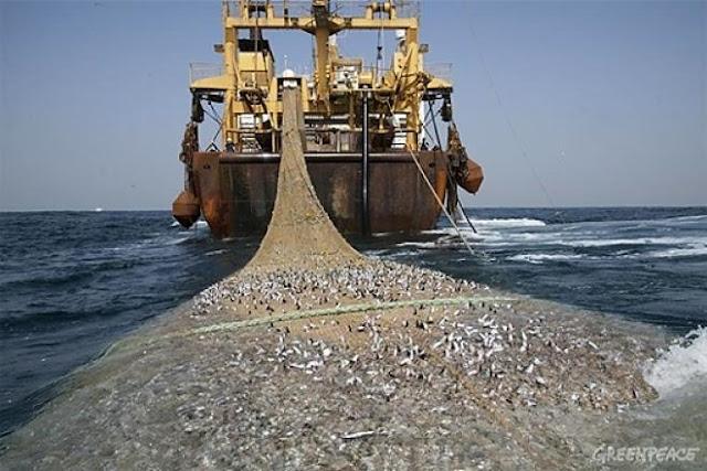 Tolak Cantrang, Perkumpulan Nelayan Jateng Sampaikan Aspirasi ke Fraksi Hanura