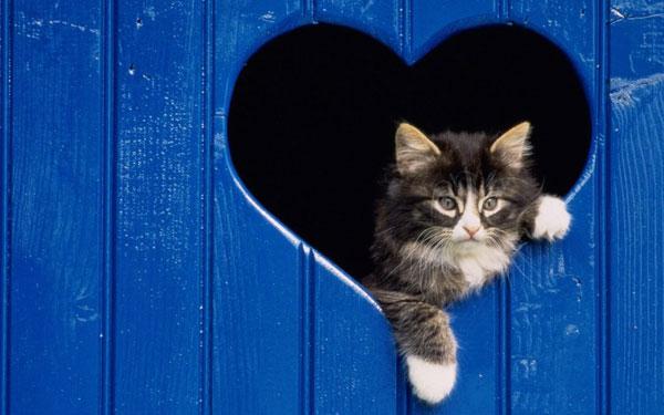 Download 2000+ Wallpaper Biru Kucing HD Paling Baru