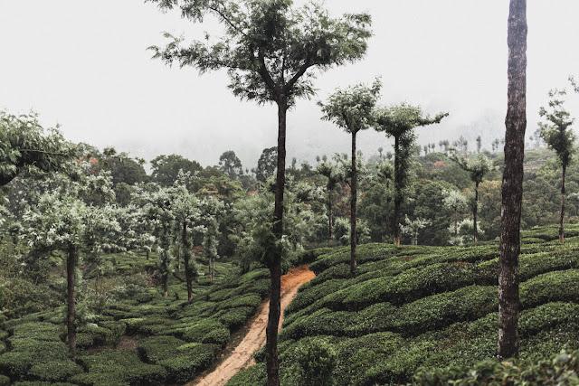 India Marlon Krieger Travel Kerela 2