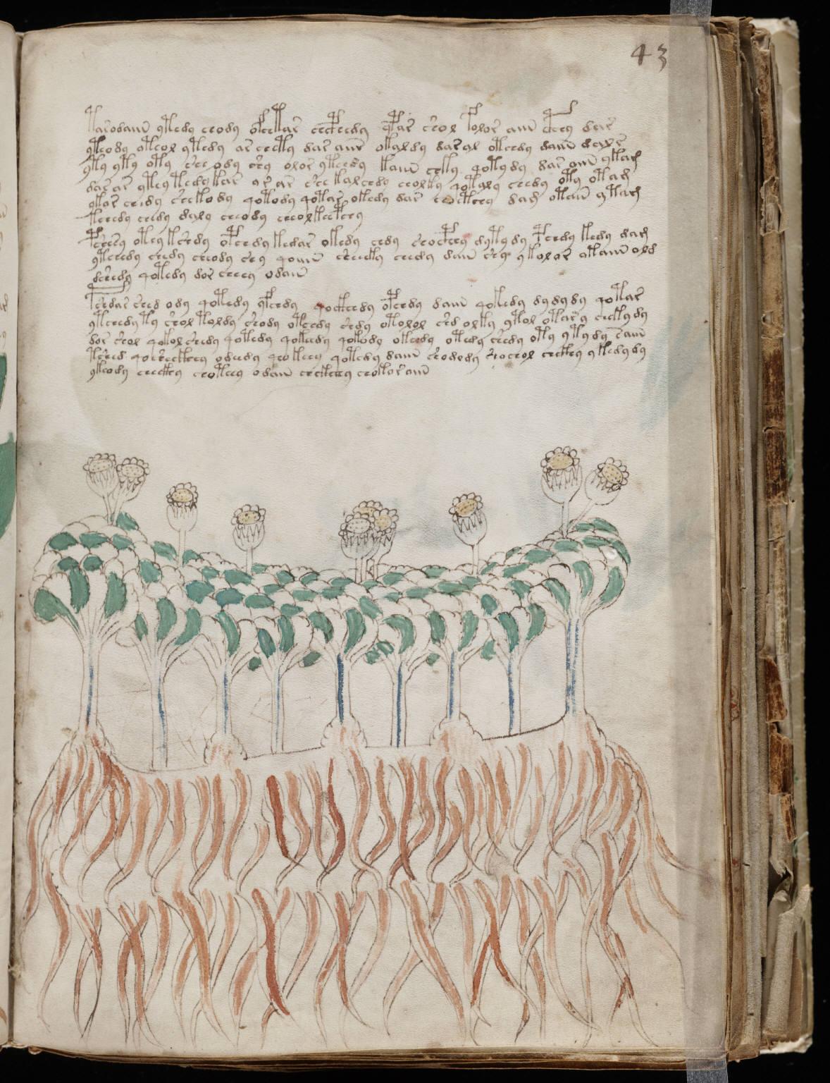 manuscrito083