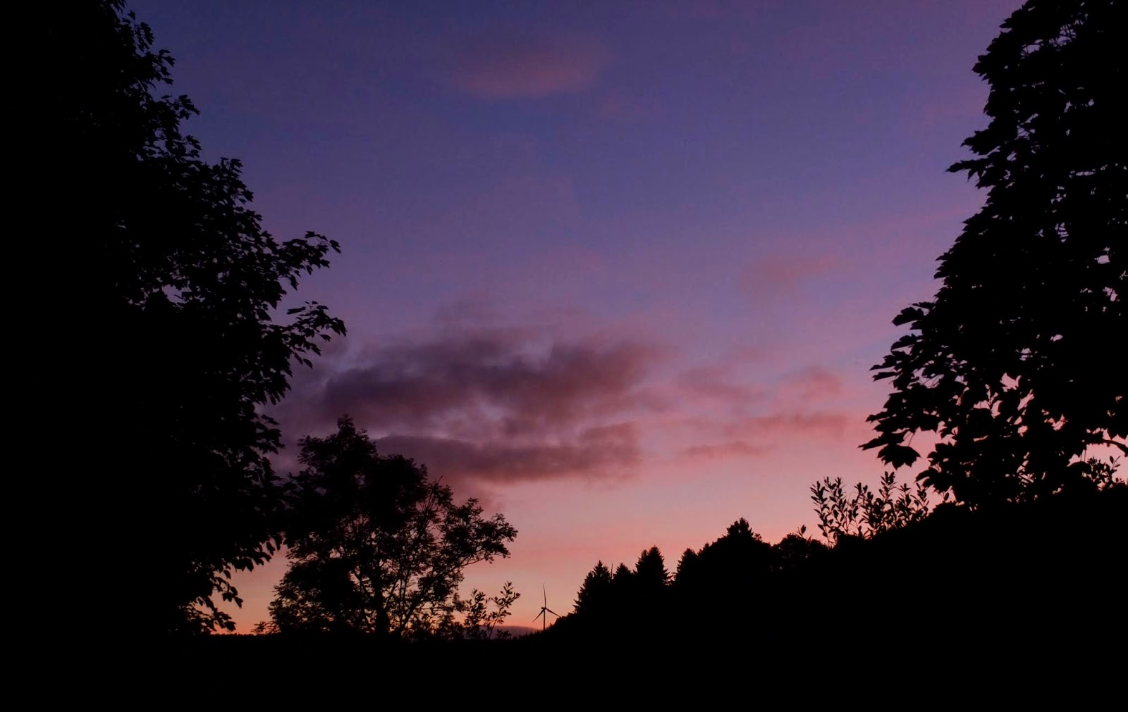 A blue and pink sky after sunset between trees in North Cork.
