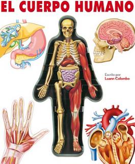 http://www.authorstream.com/Presentation/coliflora-2759031-el-cuerpo-humano/