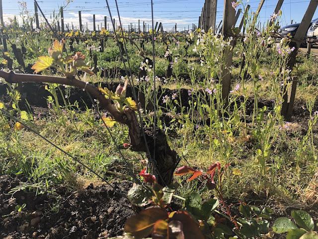 Bordeaux 2018 Conseillante Pomerol
