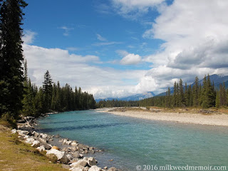 Blue Kootenay river with pines on shore and mountains in back, in Kootenay National Park, British Columbia, Canada