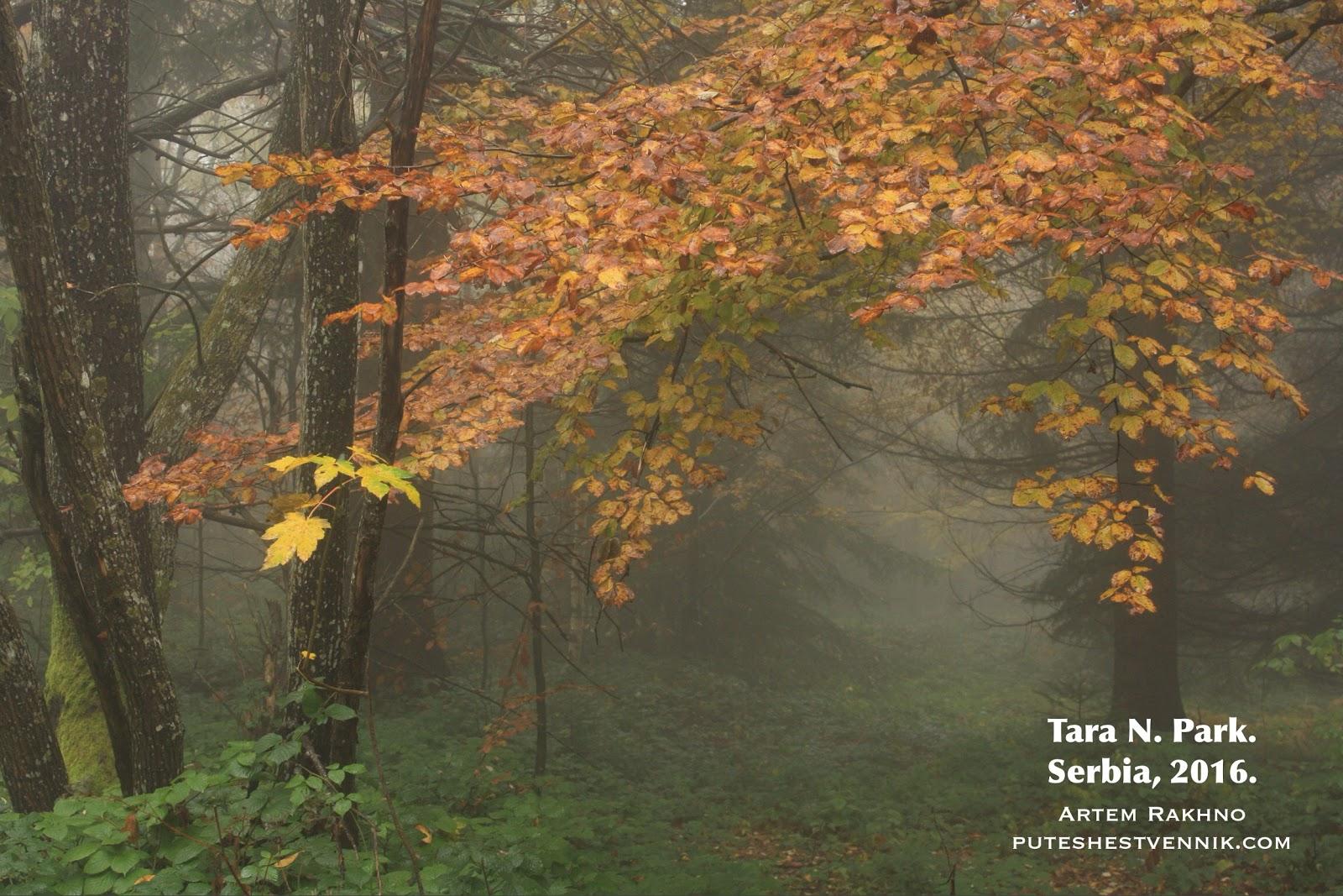 Туман в осеннем лесу в Сербии