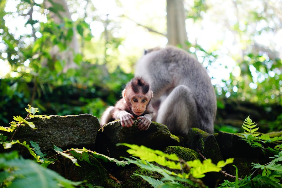 baby monkey in Bali Monkey Forest