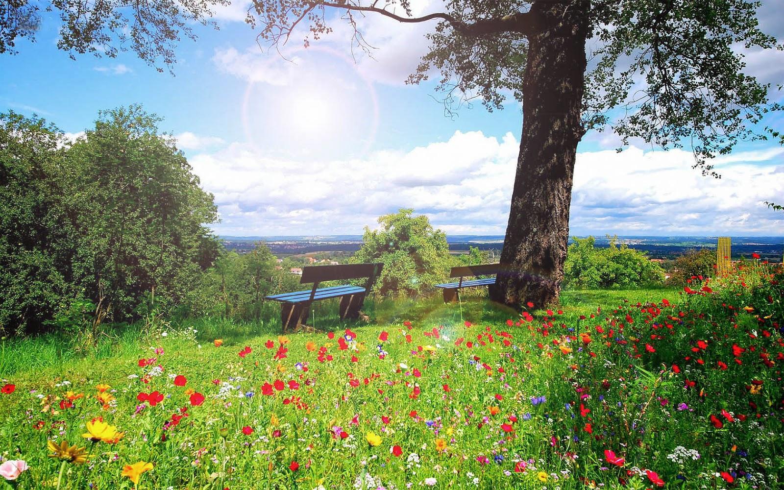 Bloemen, gras, struiken en een boom