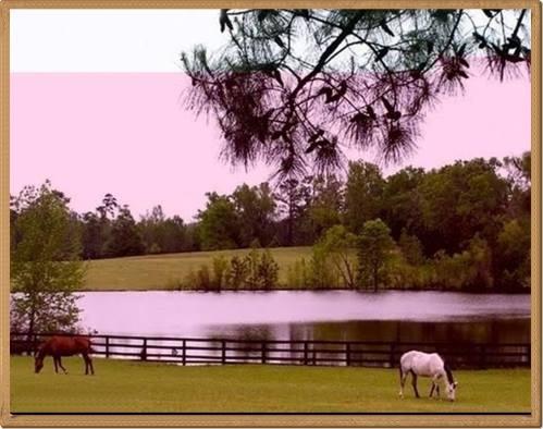 Paisagem do entardecer no campo. Um grande lago,árvores,uma cerca e cavalos no pasto.