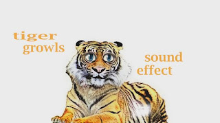 learn tiger animal sounds