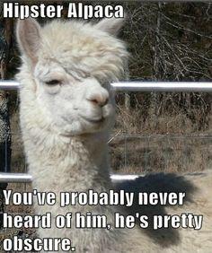 hipster alpaca meme