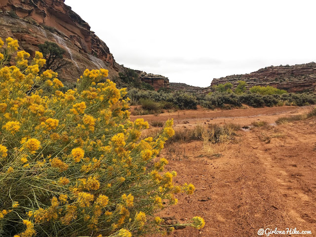 Hiking 7 Mile Canyon, Moab, Hiking Seven Mile Canyon, Moab, Hiking in Moab with Dogs