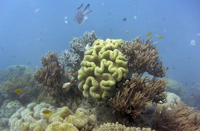 Australia's Barrier Reef at greater risk than thought