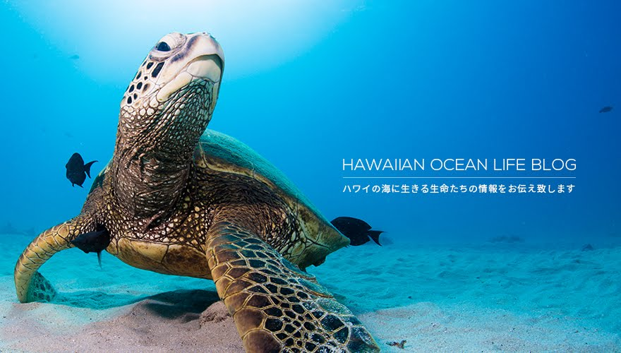 HAWAIIAN OCEAN LIFE BLOG