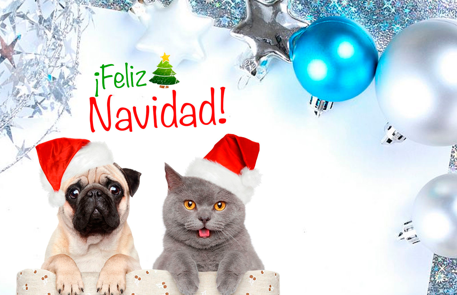 Colección de Tarjetas de Navidad de Perros y Gatos haciendo de las ...