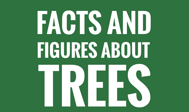 Amazing Facts and Figures About Trees