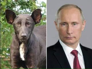 Perros que se parecen a sus dueños famosos - Presidente ruso Putin