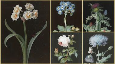 Flores, mariposas y otros insectos pintados por Barbara Regina Dietzsch