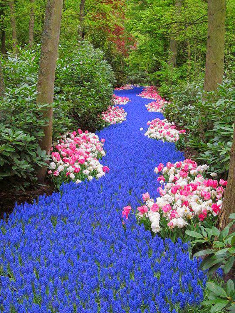 3. River of Flowers, Holland - 5 Sights So Incredible You Won't Believe They're Real