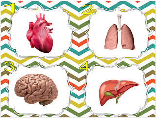 Cartes à tâches de biologie sur les organes du corps humain