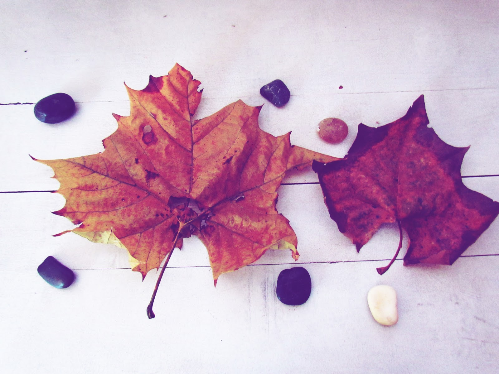 Crisp Fall Leaves in Rustic Colors on White Background + Nature Art Flat Lay
