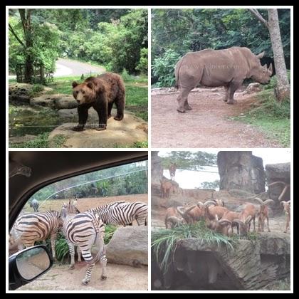 Taman Safari Indonesia 10