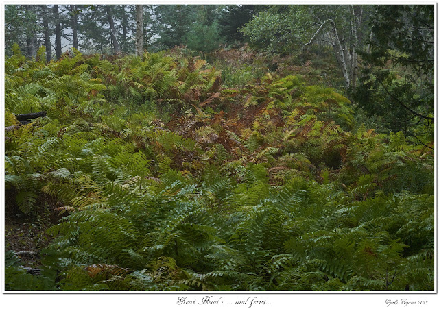 Great Head: ... and ferns...