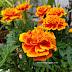 Lanskap bunga warna warni di laman