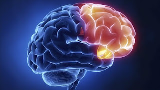 ¿Cómo aumentar la memoria, desarrollar el rendimiento mental e incrementar la potencia cerebral?