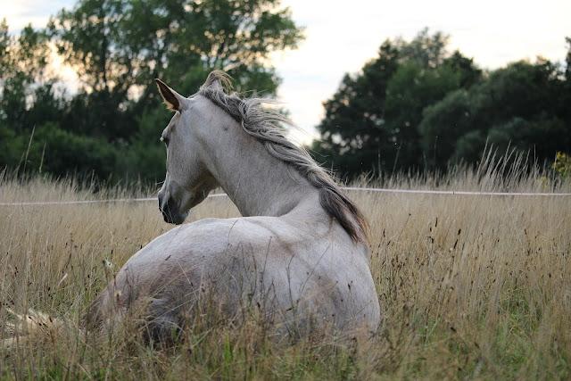 Konie szkółkowe, a raczej z nimi związane problemy