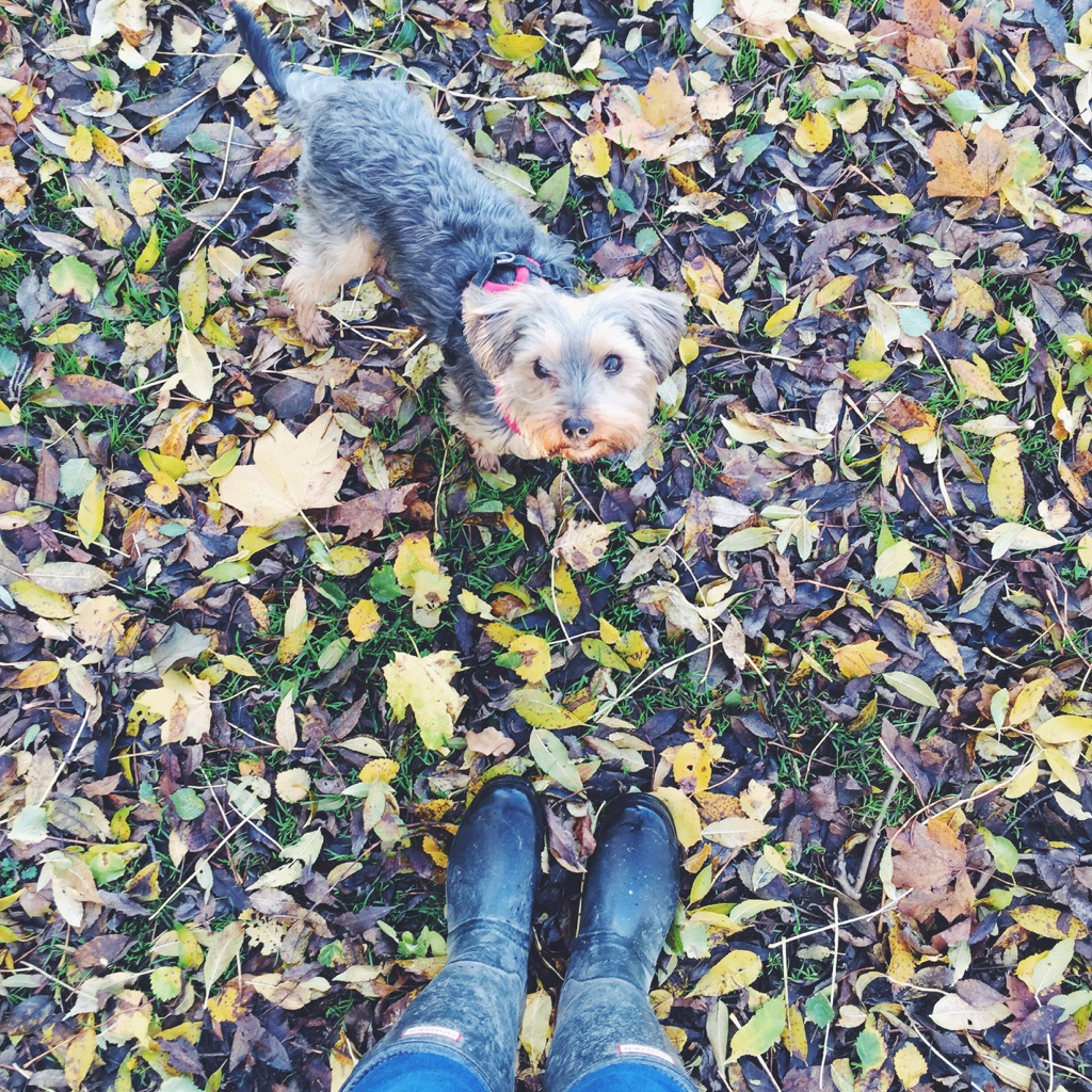 7thingsiloveaboutautumnwinter, Bloggers, fashionlayering, johnlewisadvert2015, johnlewischristmasadvert, layering, whatiloveaboutautumn, whatiloveaboutwinter,