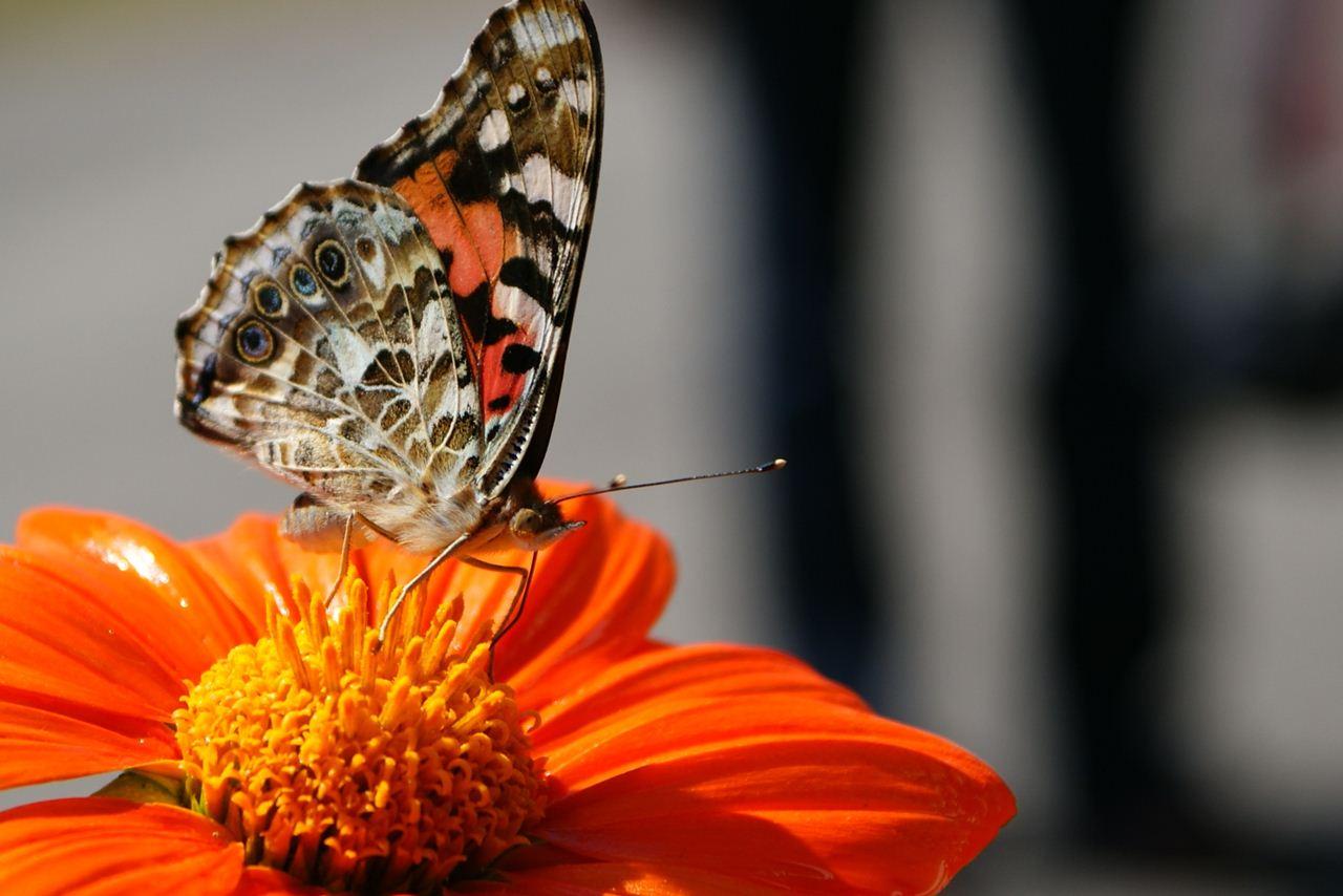20 Beautiful Animal Photos 20 Pics Amazing Creatures