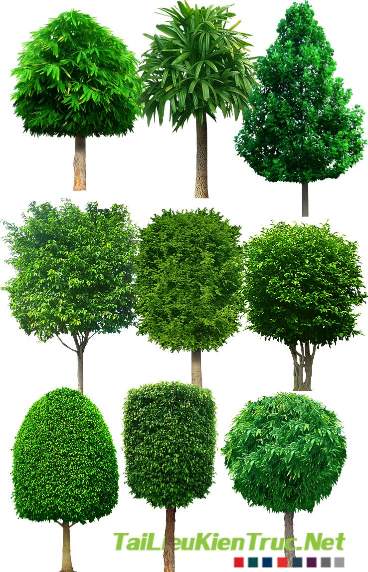 TV_Cay_So_008( 1 số cây xanh cắt xén, cắt col, cây tạo hình)