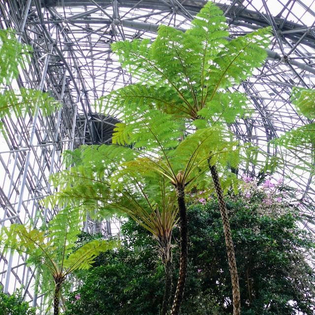 夢の島 熱帯植物館