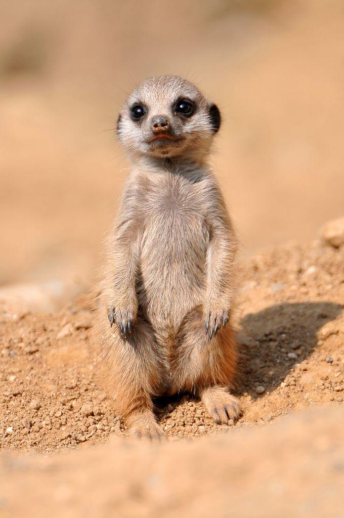 cute animals animal creatures source creature say