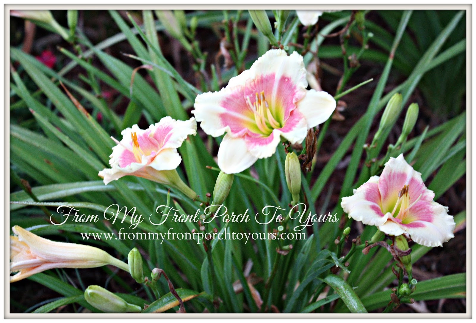 From My Front Porch To Yours- Flower Garden LIllies