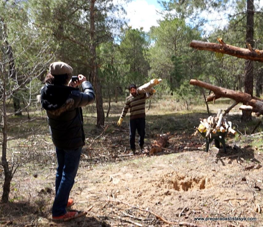 Cortando leña pinar