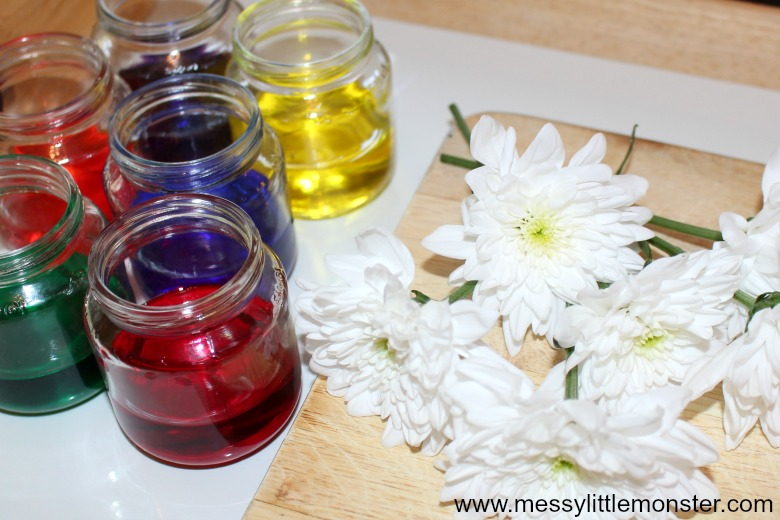 Colour Changing Flowers Science Experiment for kids