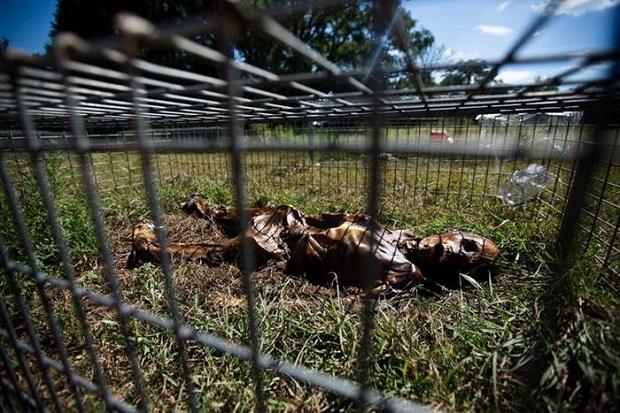 SEREM ! Di Texas, Mayat Dikerangkeng Dan Dibiarkan Membusuk Di Atas Tanah