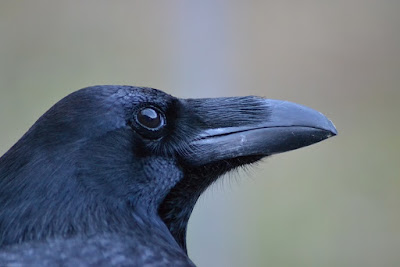 Researchers figure out similarities in brain architecture between birds and apes