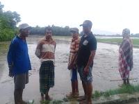 Satu Jam Diguyur Hujan, Puluhan Hektar Sawah di Desa Tumpu Jadi Lautan