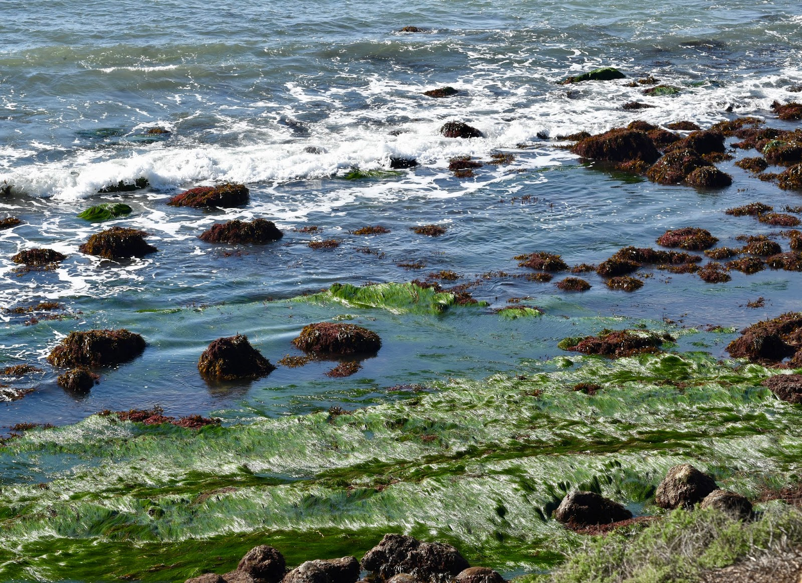 Good times rollin cabrillo tidepools the ride to the tidepools at point loma take you through fort rosecrans national cemetery its a beautiful and somber drive nvjuhfo Choice Image