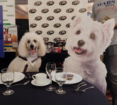 Carma at the table with Cesar westie.