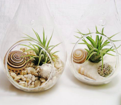 Air Plant Beach Terrarium Glass Globe