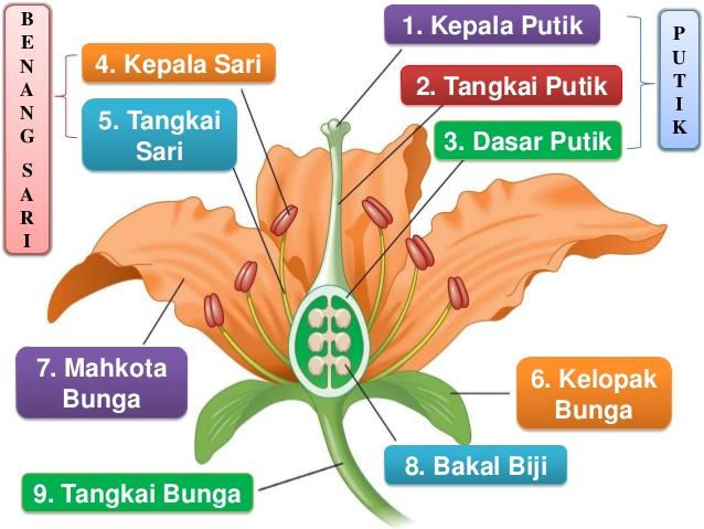 Populer 20 Gambar Bunga Sepatu Beserta Bagiannya Motif Minimalis Gambar Bunga