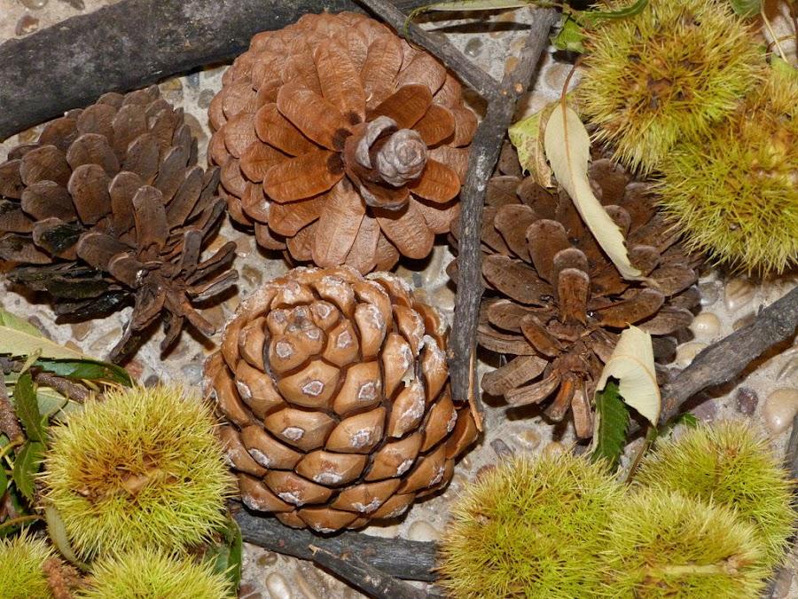 ramas-castañas-piñas