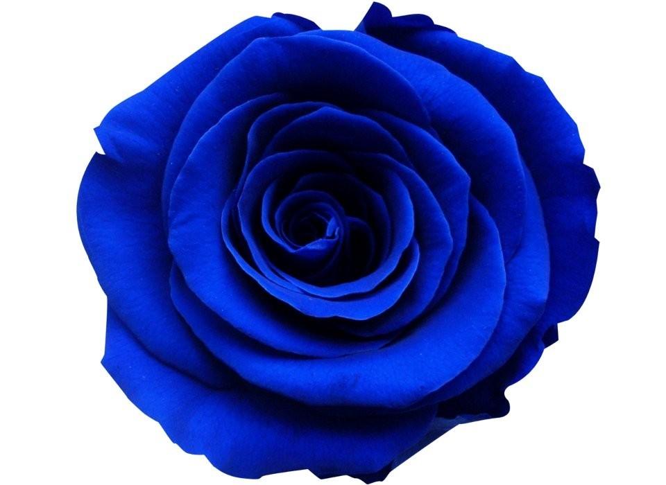 Rosa Azul Facebook Golfclub