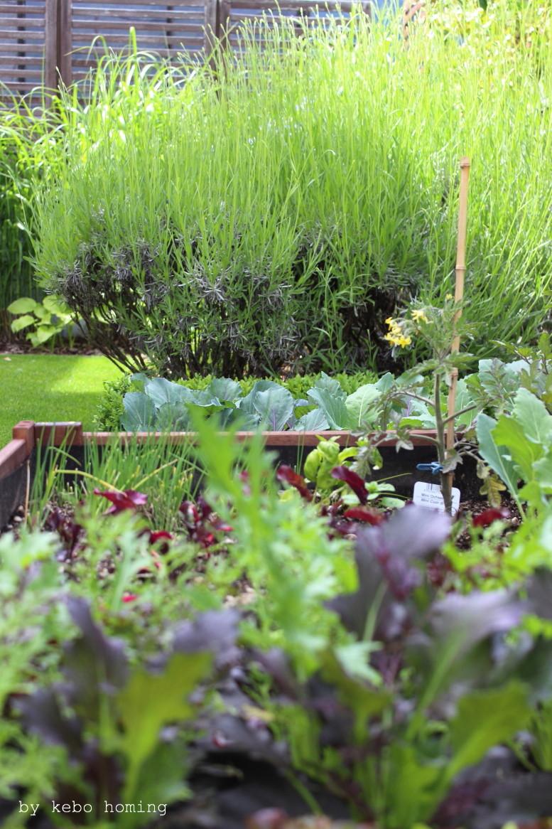 Ein klar strukturierter minimalistischer Garten, verschiedene Gräser, Lavendel, Gemüsehochbeet selbst gebaut,  Grüntöne, lineare Beete, clean, minimal styled garden, spring time in the garden, Frühling im Garten, by kebo homing, Südtiroler Food- und Lifestyleblog