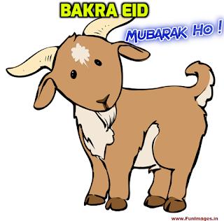 bakra eid mubarak pictures